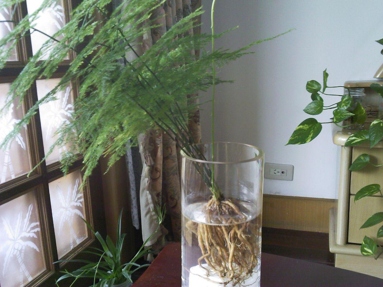 10种家居水养的室内植物 适应水栽的花卉种类有哪些