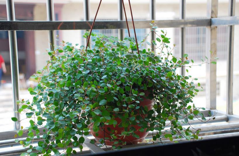 卧室适合养什么植物 卧室净化空气小帮手