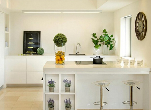 厨房适合放什么植物 厨房植物摆放风水
