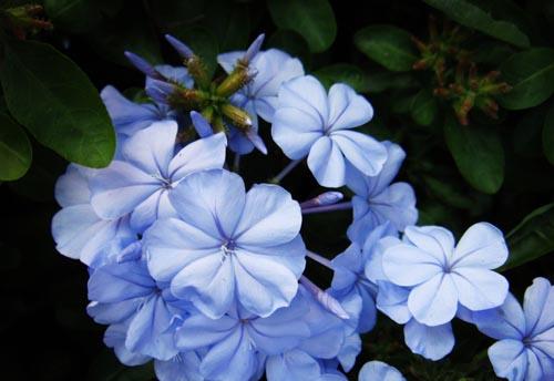 兰花香味有毒吗 兰花的花语