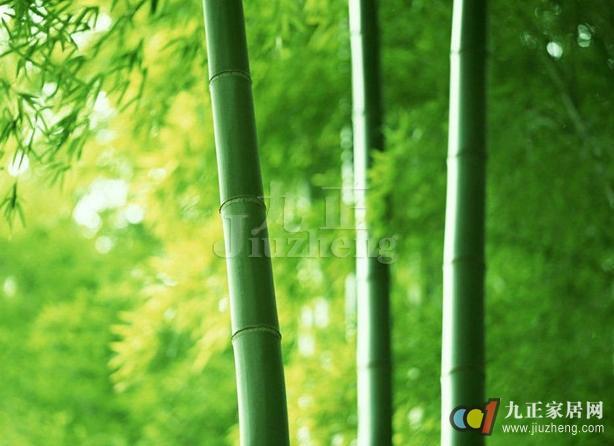 从古至今,高风亮节的竹子,都是爱花人士的挚爱,我们都希望在家的庭院中,养出几竿挺拔隽美的修竹,竹子的养殖不是很简单的,下面,九正家居网为大家讲述下竹子的养殖方法,希望可以帮助到大家。 一、竹子的介绍 竹子是一种巨大的草类,是禾本科植物,它是常绿(少数竹种在旱季落叶)浅根性植物,茎一般是圆柱形具中有节;可有一种方竹的竹竿却是四方形。竹子是重要的森林资源之一,具有分布广以,生长快,用途多。生态和经济价值高等特点,被誉为绿色的金矿。  竹子又名竹,多年生禾草类植物,茎为木质,是禾本科的一个分支,学名Bambu