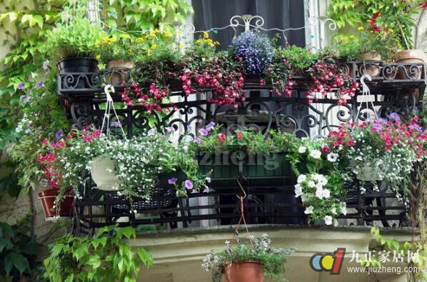 阳台上的植物风水  一,种植物盆栽  在阳台种植3盆或5盆柏,树盆栽