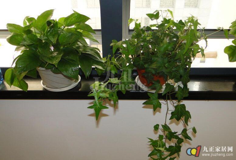 不管你是公司老板还是职场上班族,办公室风水都不容忽视。想要在职场中飞黄腾达,办公室风水是关键。下面就来和九正家居网一起解读,办公室花卉摆放的颜色和办公室里植物禁忌。 办公室花卉摆放的颜色 1、文案策划、编辑人员 东方五行属木,震卦,紫气东来:东方摆放红色的花对所有动脑工作的人员有利。  2、律师、销售、艺术家 西方五行属金,兑卦,西方摆白、黄颜色的花可增加以口为生人员的锐气,有一定的帮助。 3、投资者或弹性收入者 南方五行属火,离卦。南方摆放绿色植物可令办公室的女姓提高个人美感和魅力,此方位摆红花有一定的