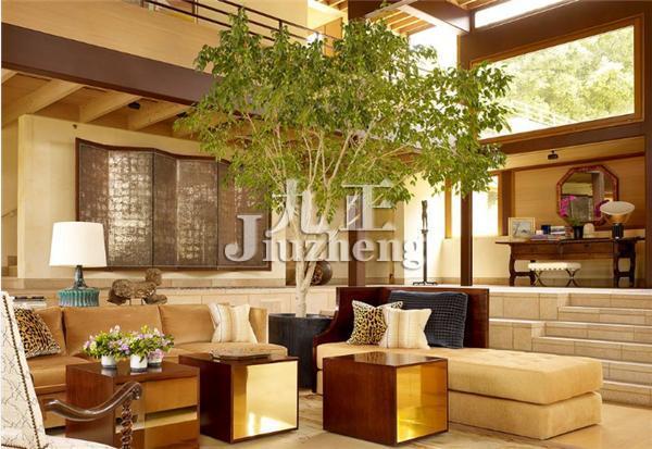 客厅风水 客厅植物风水
