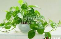 防辐射有哪些植物 防辐射的方法