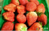牛奶草莓种植要点  牛奶草莓病害防治