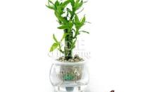 富贵竹冬天怎么养 富贵竹的养殖方法