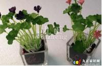 植物不能乱摆放 植物摆放的风水禁忌