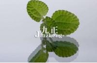 吸毒草有几种 吸毒草的作用