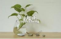 常见室内水培植物有哪些 水培植物的养护要点