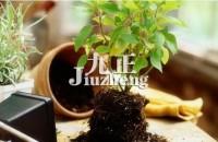招财植物有哪些?室内招财盆栽介绍