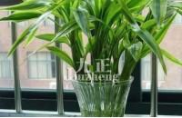 怎样养好富贵竹 富贵竹养殖注意事项
