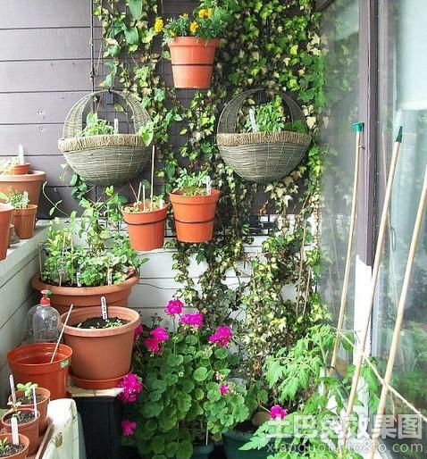 阳台塑料花盆图片装修效果图