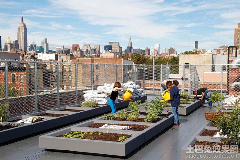 屋顶菜园设计图
