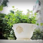 室外陶瓷花盆图片