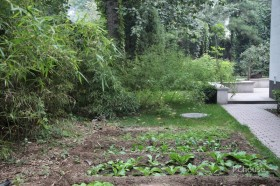 比利时驻华大使的禅意家 庭院装修效果图