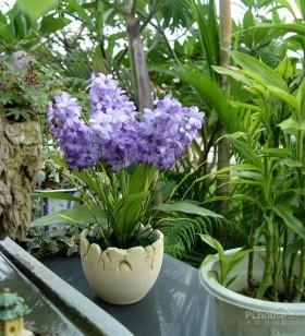以花装饰 温馨小居室