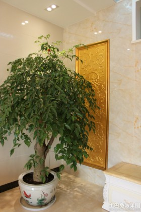 室内植物发财树图片大全