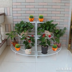家居阳台花卉图片大全