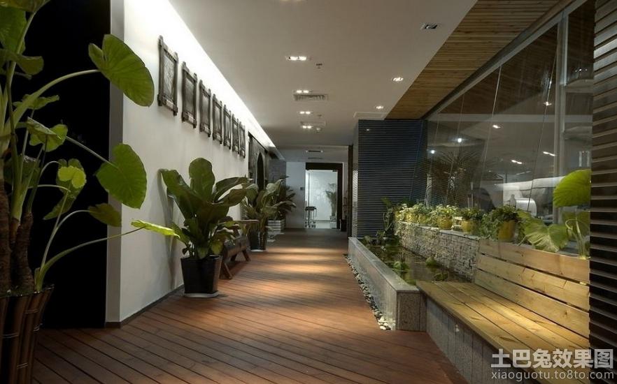 办公室走廊植物摆放图片
